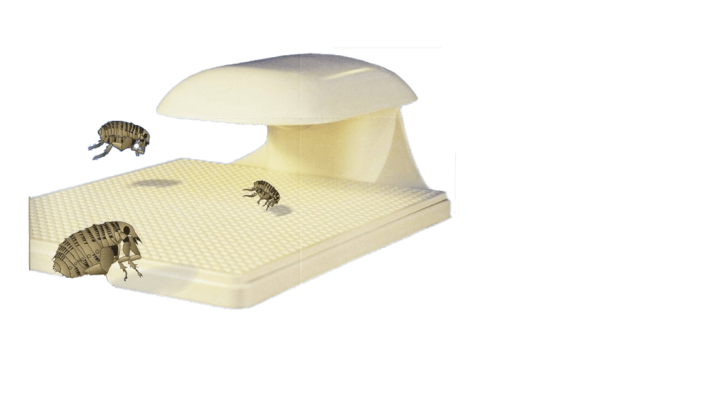 3 most used flea traps do really work how to get rid of flea on dogs on cats and in the house. Black Bedroom Furniture Sets. Home Design Ideas