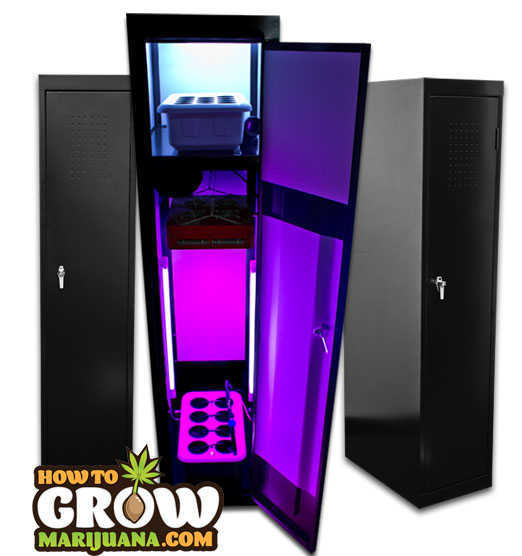 Full Spectrum Grow Lights