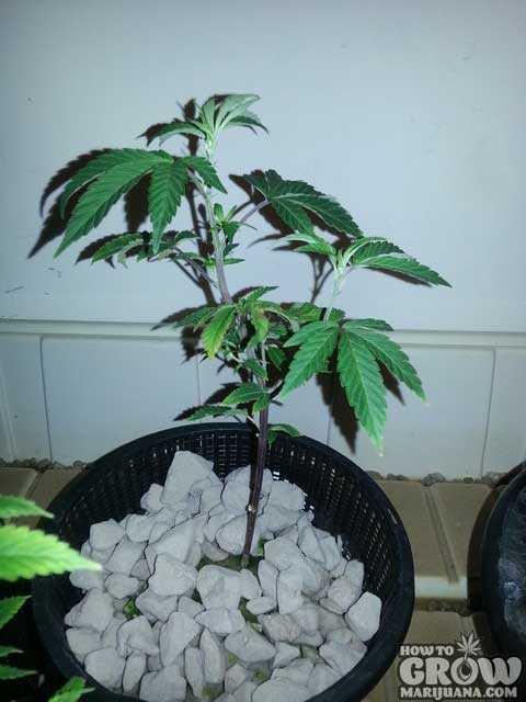 Top Hydroponic Grow Box