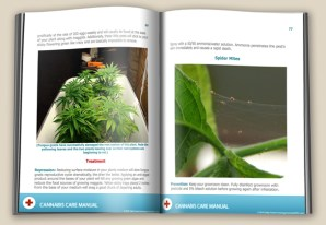 how to grow bud