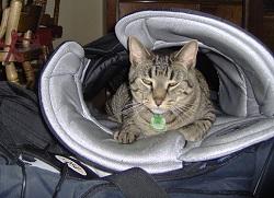 cat-hockey-pants