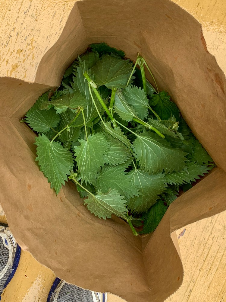 a bag of harvested stinging nettles.