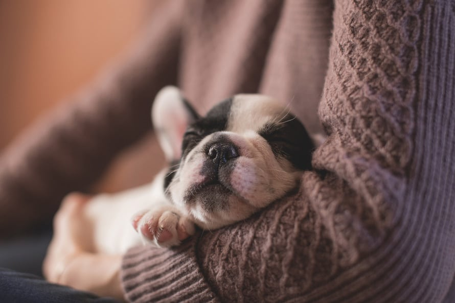 6 Easy Ways to Train a Puppy Not to Bite