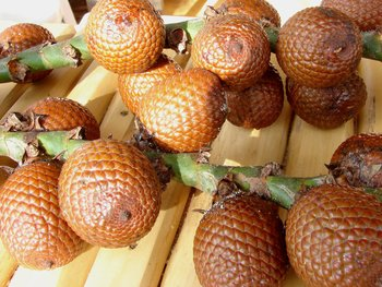 peruvian fruits and vegetables - aguaje fruit