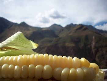 peruvian fruits and vegetables - choclo corn