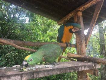 Parrots on Inca Jungle Trek to Machu Picchu