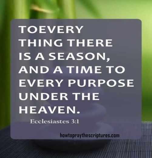12 inspirational bible verses
