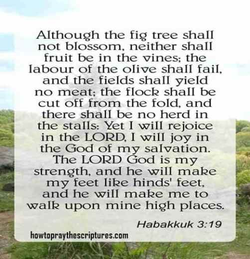 Although the fig tree shall not blossom neither shall