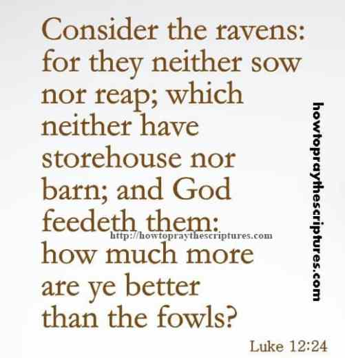 Consider The Ravens For They Neither Luke 12-24