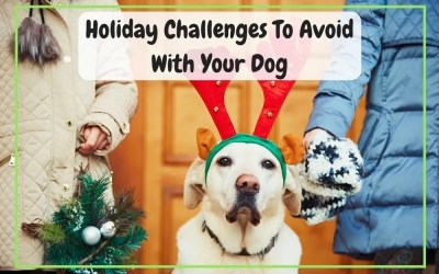 Holiday Challenges to Avoid with Your Dog