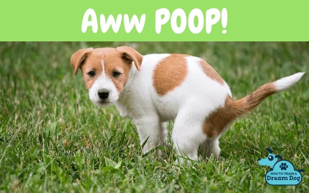 Aww POOP!