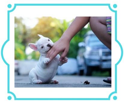 Puppy biting hand