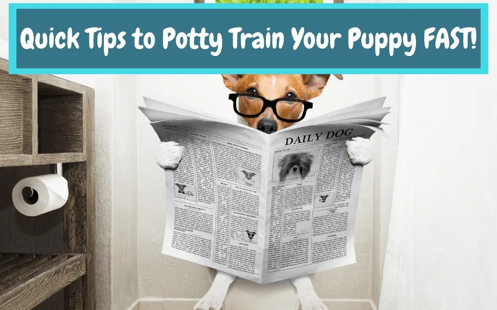 Quick Tips to Potty Train Your Puppy Fast