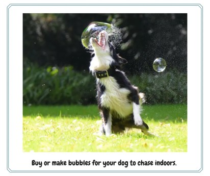 Exercise Activities For Your Dog
