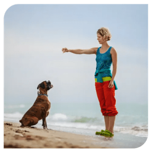 Top Tip to Successfully Train Your Dog