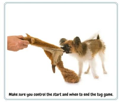 tug game with dog