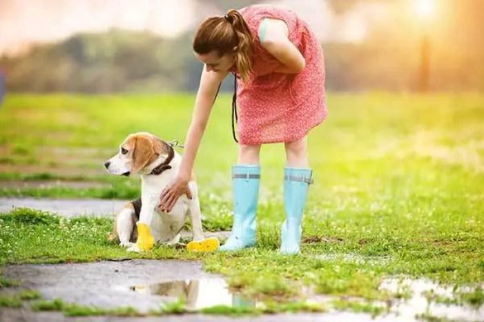 dog won't poop on wet grass