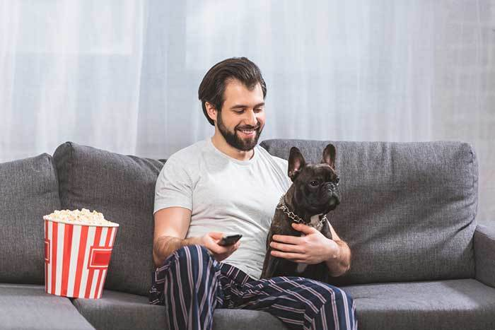 french bulldog watching tv with his owner