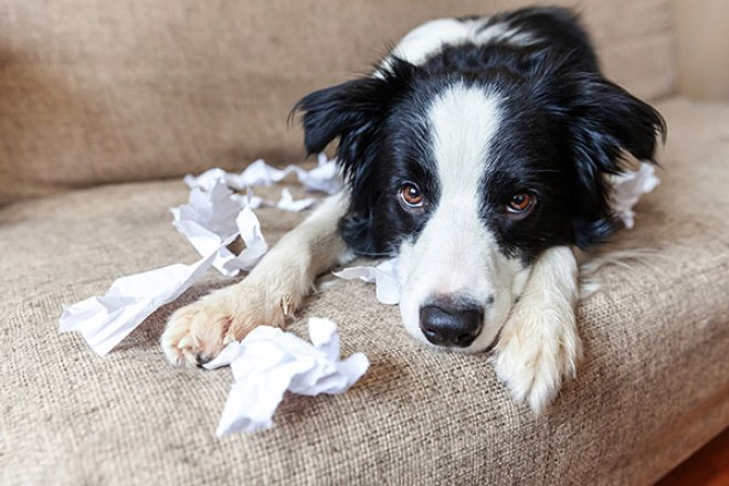 Why Do Dogs Eat Paper Towels?