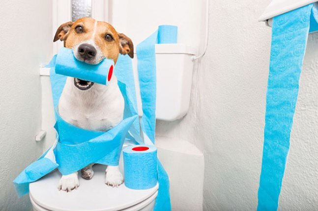 dog on a toilet seat playing with toilet paper