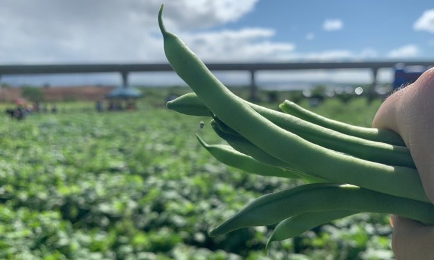 What's The Future Of Food And Farming In Hawaiʻi?