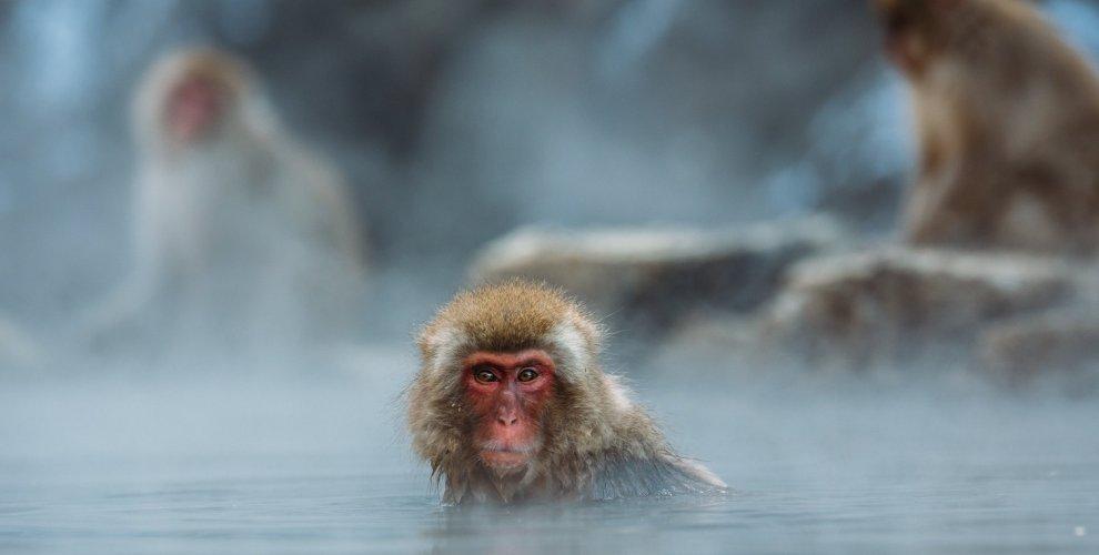 El mono que salvó el pez