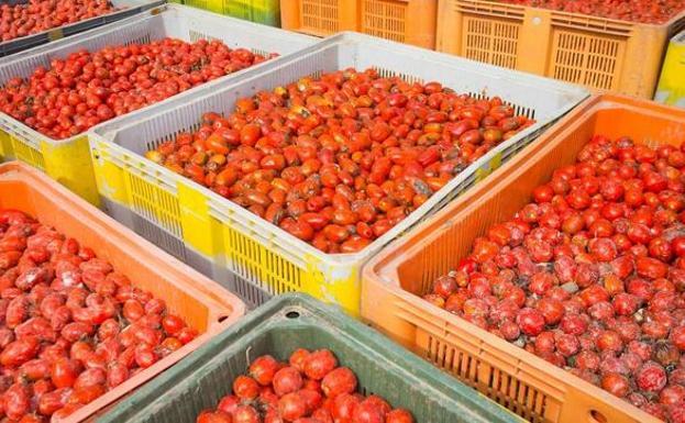 Las 145 toneladas de tomate salen de La Llosa hacia Buñol