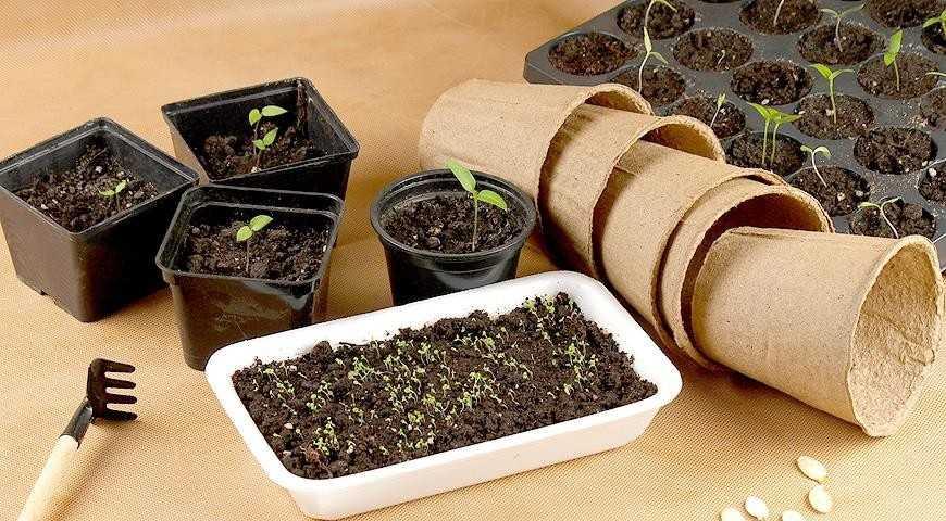 Tigamuri (cu scopul de a rupe semințele cele mai multe culturi vegetale, 3-4 g pe 1 kg),