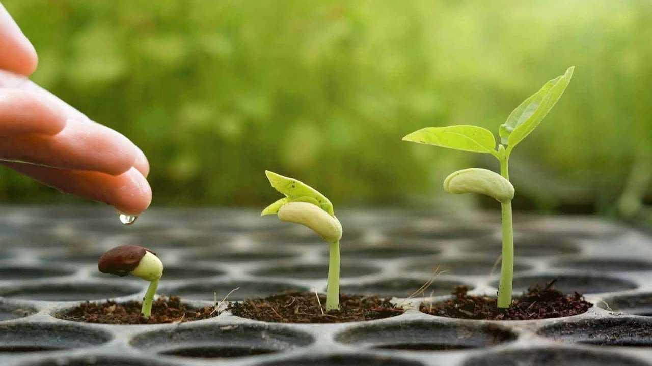 Pentru dezinfectarea containerelor, a materialului de semințe și a suprafețelor solului, este destul de reușit. Puteți utiliza soluții de dezinfectare pentru mâini - ele sunt vândute farmacii, supermarketuri mari.