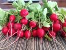 Лучшие сорта винограда для личного потребления