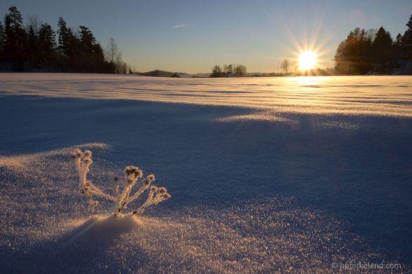 Catching the last light, Enebakk, Norway