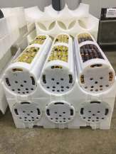 6 basket pallet with baskets loaded with Juices