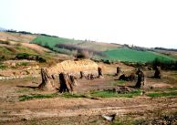 Dunarobba Fossil Forest