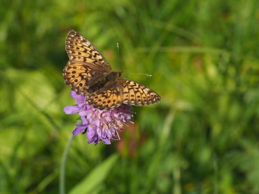 Am Schmetterlingsweg