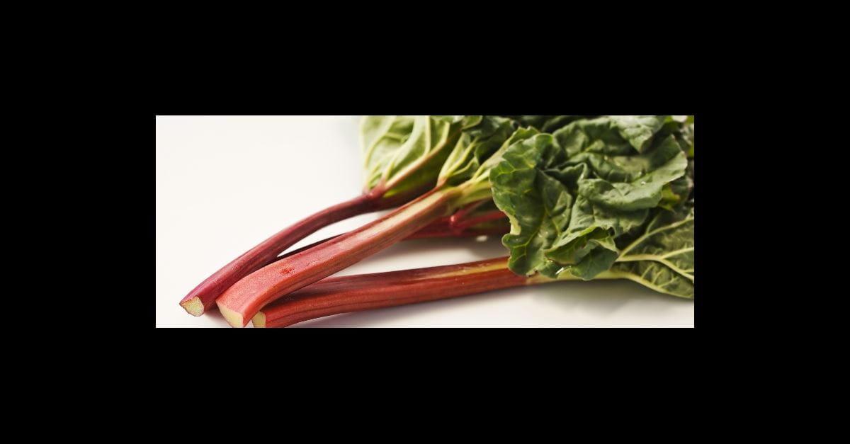 La Rhubarbe Un Fruit Ou Un Legume Gardena