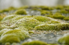 World of the Mosses