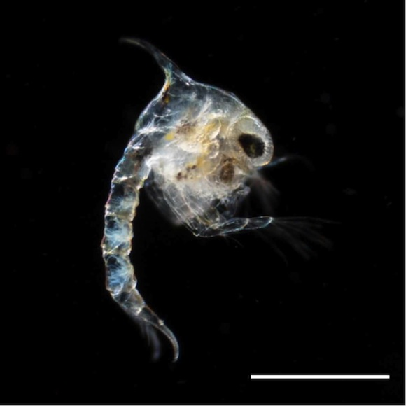 Crustacea3-2-2-014_0010