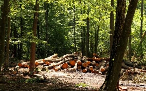Як вирубати ліс у заказнику і не понести відповідальності. Майстер-клас від Ківерцівського лісгоспу