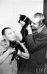 Кастинг чёрных котов (17)
