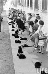 Кастинг чёрных котов (3)