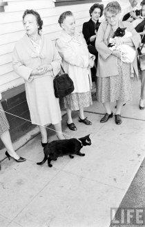 Кастинг чёрных котов (7)