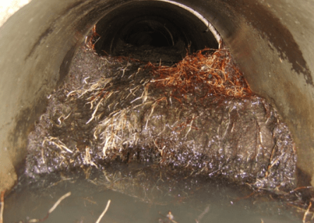 Clogged Sewer Line