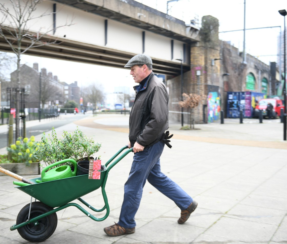 Man pushing wheelbarrow full of plants underneath railway bridge