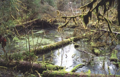Photo by H.S. Cooper © Olympic National Park