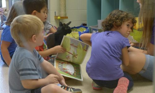 Children at Little Paws Storytime at HSHV