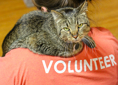 volunteer with cat at the cat cafe