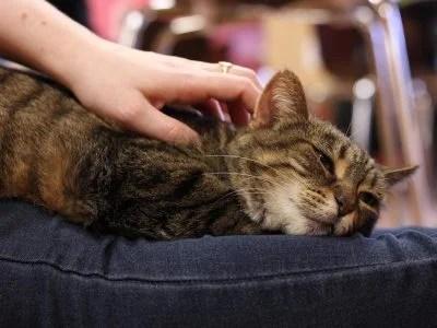 cat_pet (1)