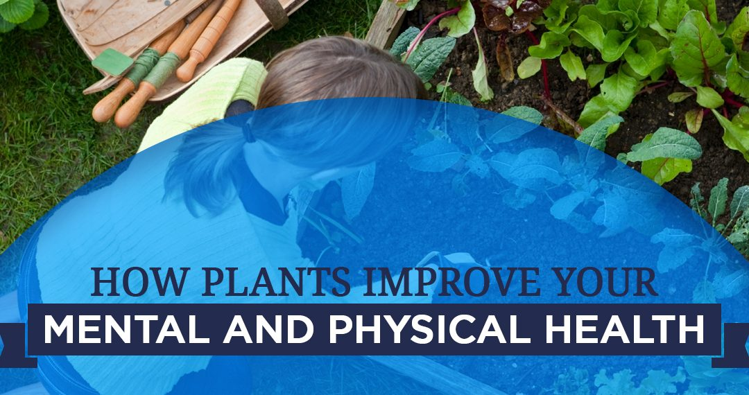 Psychological Benefits Of Plants Horticulture Therapy