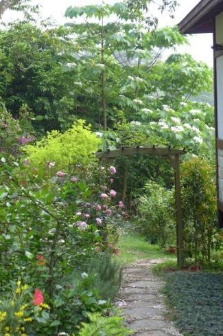My Garden-tung flowers