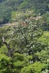 My garden-Tung trees